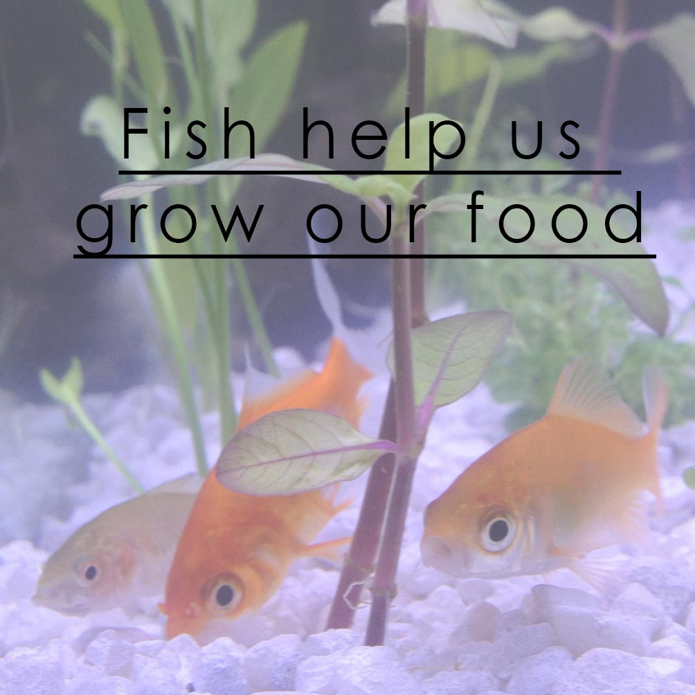 Anything Aquaponics is changing how we grow our food   http://anythingaquaponics.com
